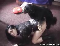 Муж Смотрит Жену Ебет Собака Порно